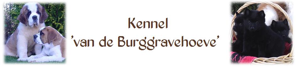 St Bernards van de Burggravehoeve